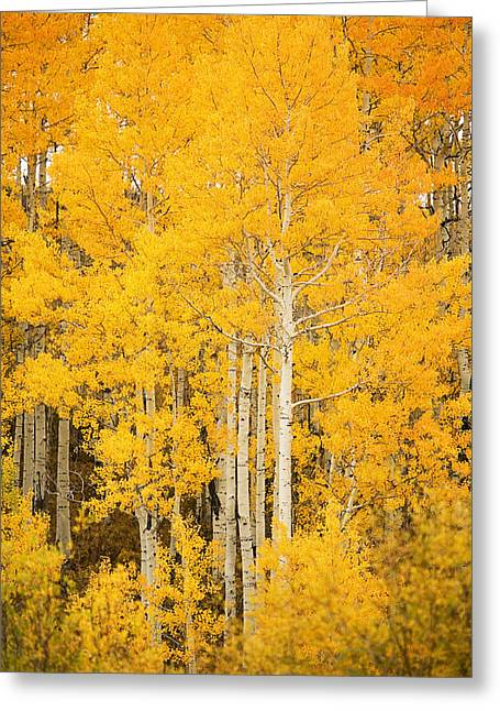 Ron Woods Greeting Cards - Yellow Aspens Greeting Card by Ron Dahlquist - Printscapes