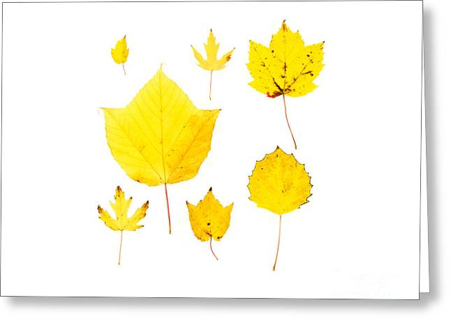 Yellow Autumn Leaves Greeting Card by Jennifer Booher