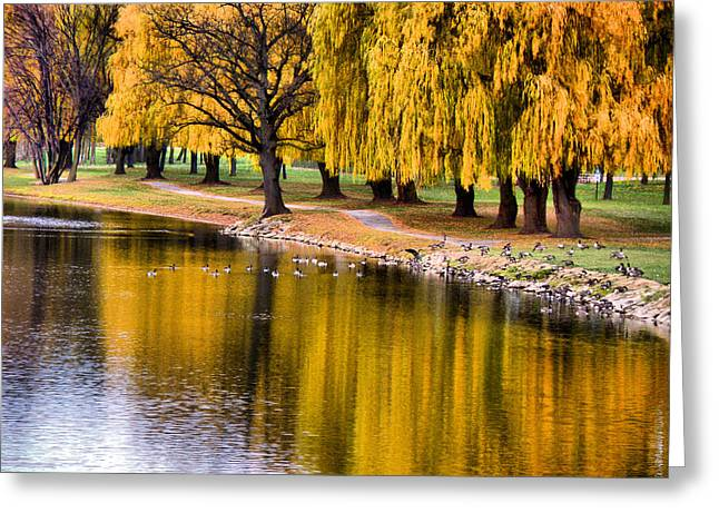 Yellow Autumn Greeting Card by Scott Hovind