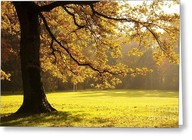 Fall Grass Greeting Cards - Yellow Autumn Greeting Card by Sick Michael
