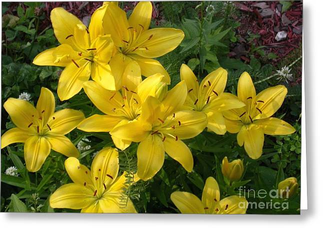 Day Lilly Greeting Cards - Yellow Beauties Greeting Card by Sandra  Huston