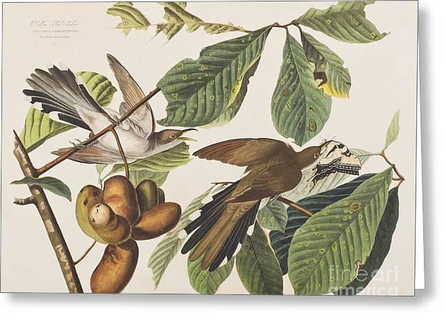 Yellow Leaves Drawings Greeting Cards - Yellow Billed Cuckoo Greeting Card by John James Audubon