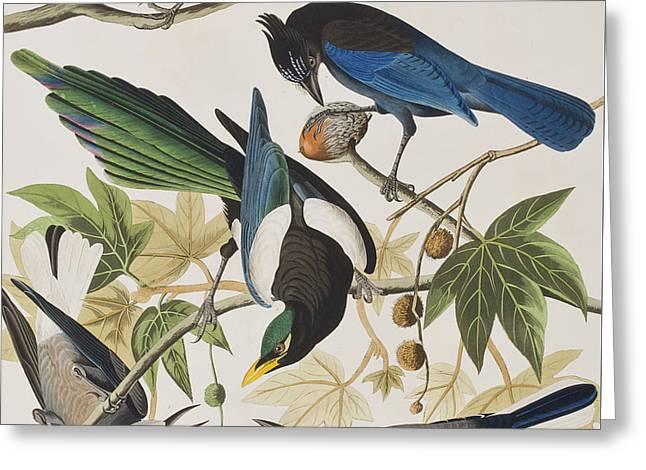 Yellow-billed Magpie Stellers Jay Ultramarine Jay Clark's Crow Greeting Card by John James Audubon
