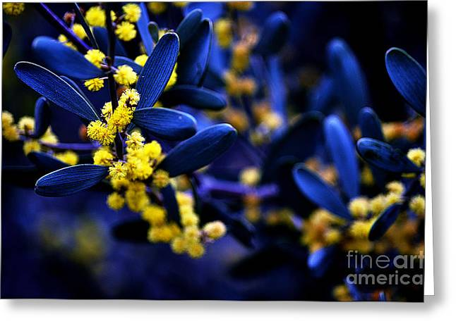 Yellow Bursts In Blue Field Greeting Card by Clayton Bruster