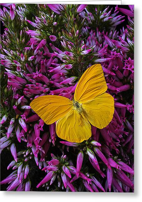 Yellow Butterfly Greeting Cards - Yellow Butterfly On Italian Ventricosa Greeting Card by Garry Gay