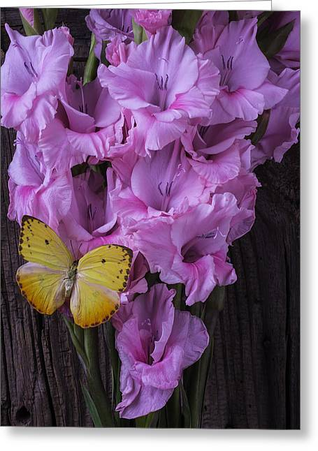 Gladiolus Greeting Cards - Yellow Butterfly On Pink Glads Greeting Card by Garry Gay