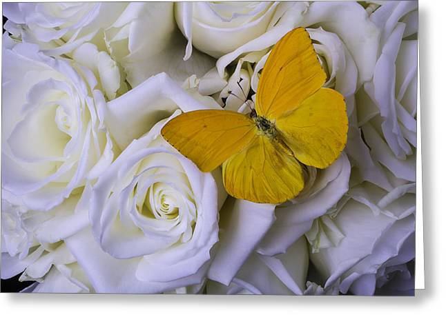 White Photographs Greeting Cards - Yellow Butterfly On White Roses Greeting Card by Garry Gay