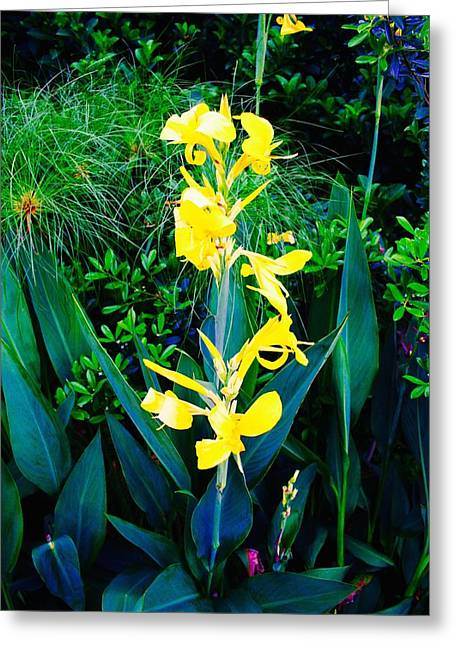Canna Greeting Cards - Yellow Canna Greeting Card by Bennett Thompson