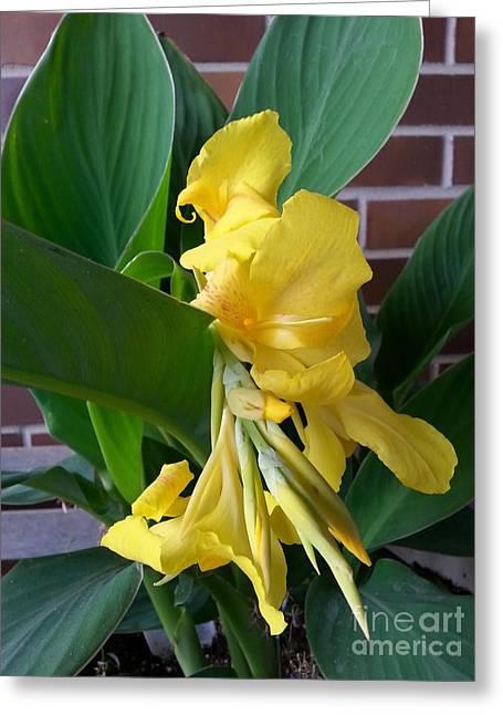 Yellow Canna Greeting Card by Manuel Matas