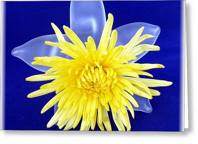 Interior Still Life Greeting Cards - Yellow Chrysanthemum on glass Greeting Card by Barbie Corbett-Newmin
