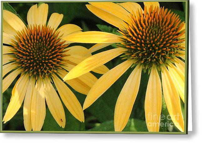 Nature Center Greeting Cards - Yellow Coneflowers Greeting Card by  Photographic Art and Design by Dora Sofia Caputo