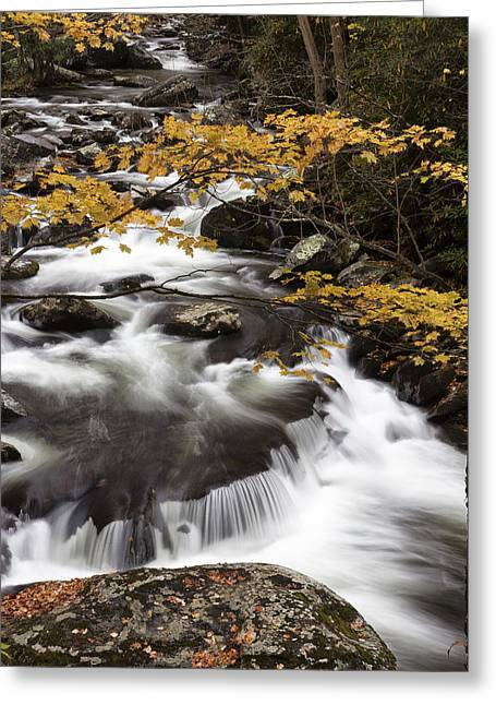Yellow Contrast Greeting Card by Jon Glaser