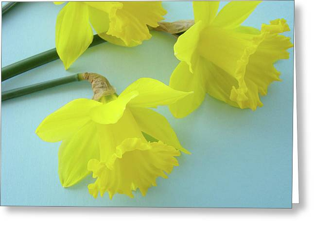 Floral Photographs Greeting Cards - YELLOW DAFFODILS ARTWORK Spring Flowers Art Prints Nature Floral Art Greeting Card by Baslee Troutman