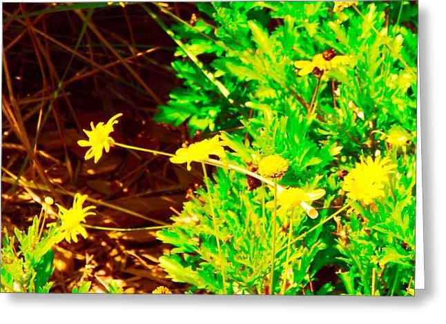 Enhanced Greeting Cards - Yellow Daiyses  Greeting Card by Caroline Gilmore