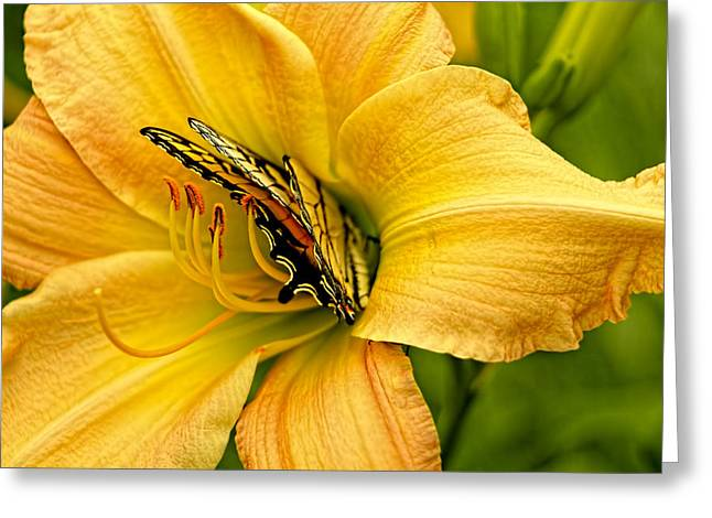 Nature Greeting Cards - Yellow Day Lily And Yellow Swallowtail  Greeting Card by Geraldine Scull