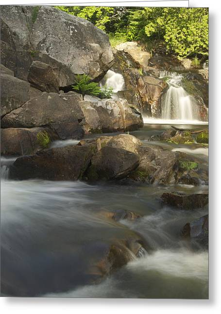 Yellow Dog Falls Greeting Cards - Yellow Dog 5 Greeting Card by Michael Peychich
