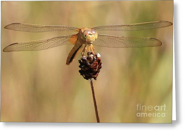 Dragonflies Greeting Cards - Yellow Dragonfly Greeting Card by Carol Groenen