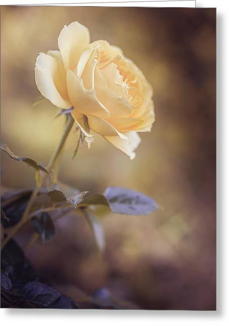 Yellow Dream Greeting Card by Cindy Grundsten