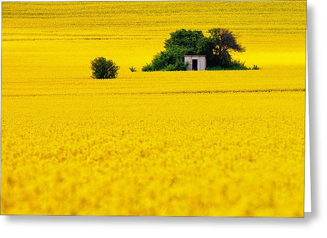 Sheds Greeting Cards - Yellow Greeting Card by Evgeni Dinev