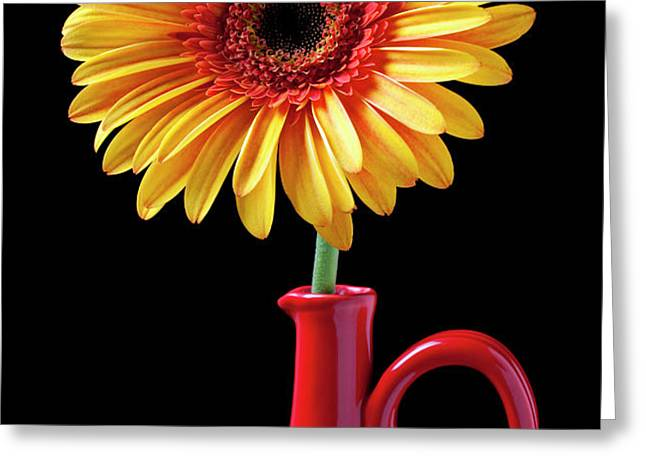 Yellow fancy daisy in red vase Greeting Card by Garry Gay