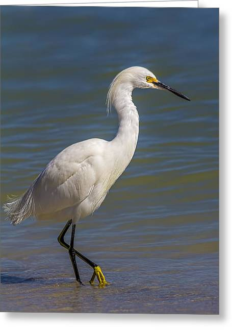 Yellow Feet Greeting Card by Marvin Spates