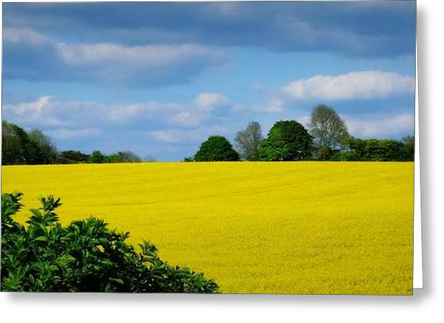 Yellow Fields Greeting Card by Lainie Wrightson