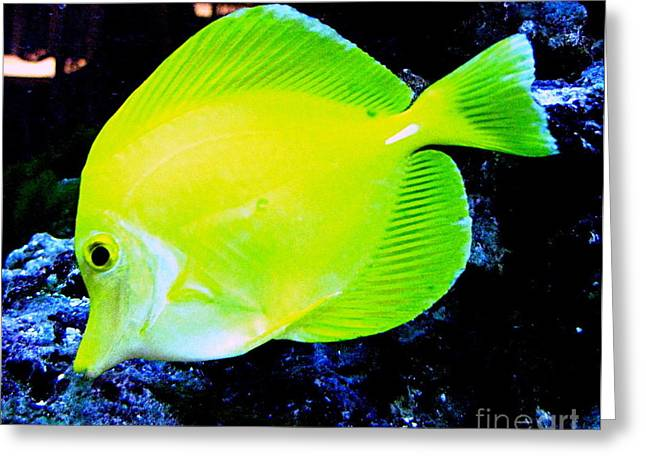 Original Photographs Greeting Cards - Yellow Fish Greeting Card by Colleen Kammerer