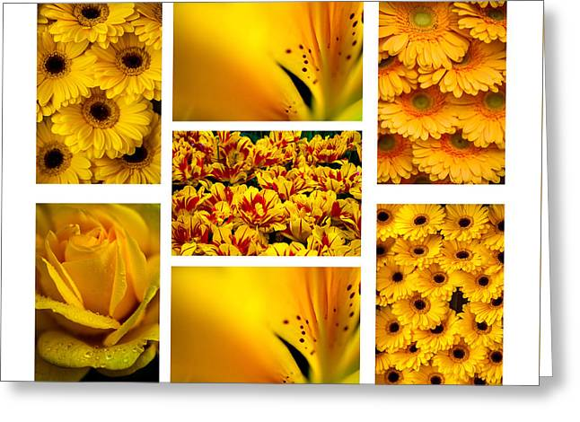 Yellow Flowers Collection. White. Polyptych Greeting Card by Jenny Rainbow