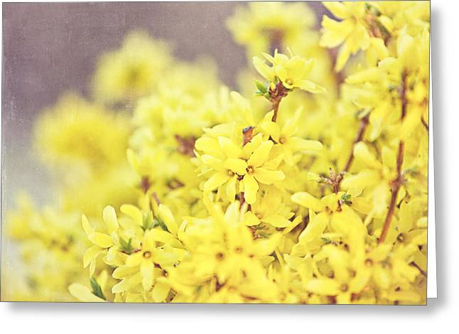 Forsythia Greeting Cards - Yellow Forsythia Greeting Card by Lisa Russo