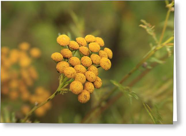 Log Cabin Digital Greeting Cards - Yellow Garden Tansey Greeting Card by Joseph Noonan