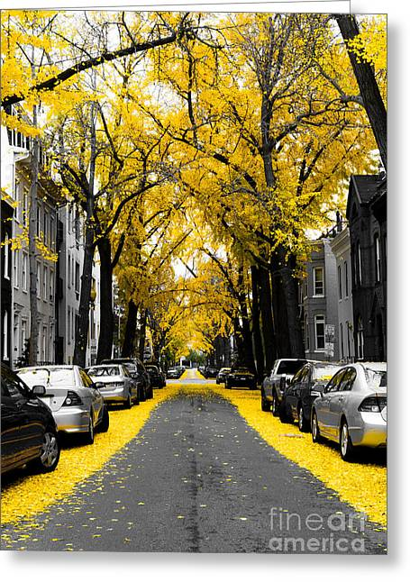 District Of Columbia Greeting Cards - Yellow Gingko Trees in Washington DC Greeting Card by Paul Frederiksen