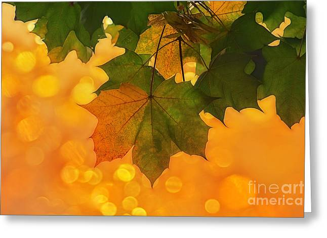 Yellow/green Greeting Card by SK Pfphotography