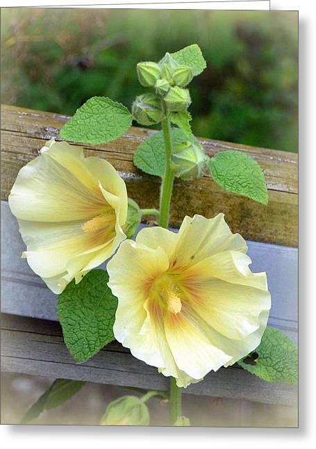 Yellow Hollyhocks Greeting Card by Carla Parris