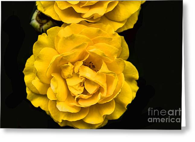 Stigma Greeting Cards - Yellow Is Beautiful Greeting Card by Steven Parker