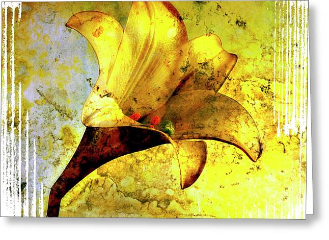Yellow lily Greeting Card by BERNARD JAUBERT