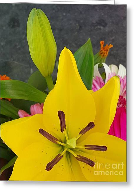 Bloosom Greeting Cards - Yellow Lily With Bud Greeting Card by Jasna Gopic
