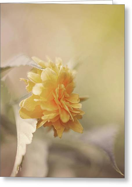 Yellow Love Greeting Card by Cindy Grundsten