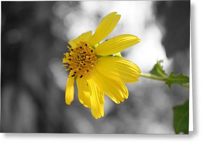 Yellow Greeting Card by Mandy Shupp