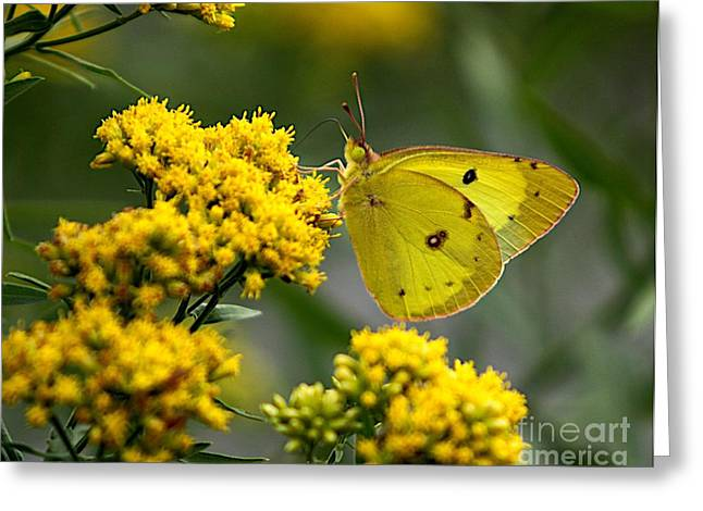 Yellow On Yellow Greeting Card by Robert Pearson