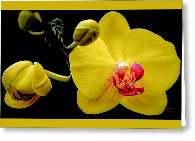Yellow Orchid And Buds Greeting Card by Julie Palencia
