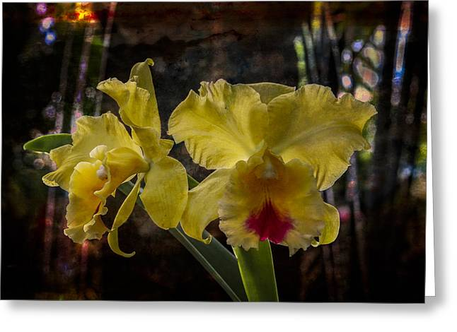Yellow Orchids Greeting Card by Debra and Dave Vanderlaan