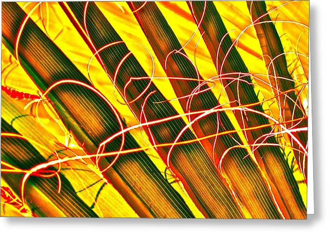 Tropical Photographs Digital Greeting Cards - Yellow Palm Fun Greeting Card by Gwyn Newcombe
