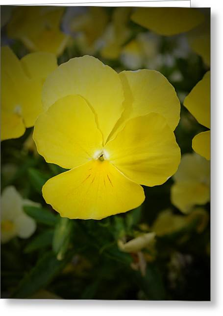 Floral Digital Art Greeting Cards - Yellow Pansy Greeting Card by Richard Andrews