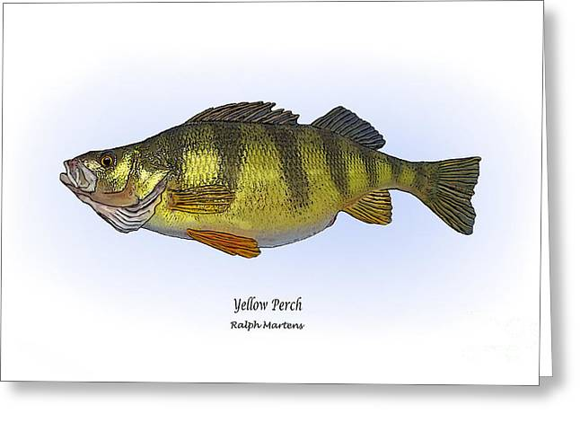 Sunfish Greeting Cards - Yellow Perch Greeting Card by Ralph Martens