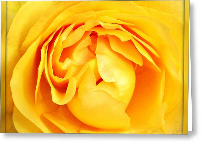 Yellow Petals Greeting Card by Cathie Tyler