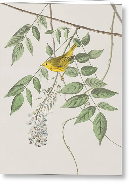 Warblers Greeting Cards - Yellow Poll Warbler Greeting Card by John James Audubon