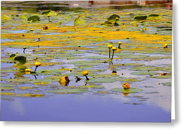 Lilly Pad Greeting Cards - Yellow Pond Greeting Card by Brian Fisher