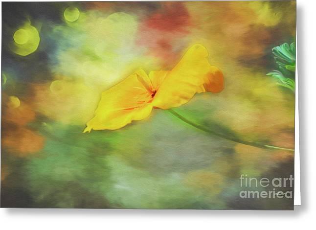 Yellow Poppy Greeting Card by Jutta Maria Pusl