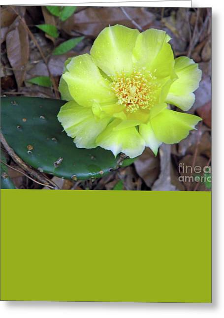 Best Seller Greeting Cards - Yellow Prickly Pear Blossom Greeting Card by D Hackett