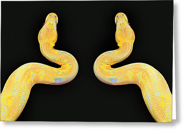 Pythons About To Eat A Baby Greeting Card by Robert Frank Gabriel